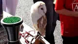 Dancing Barn Owl