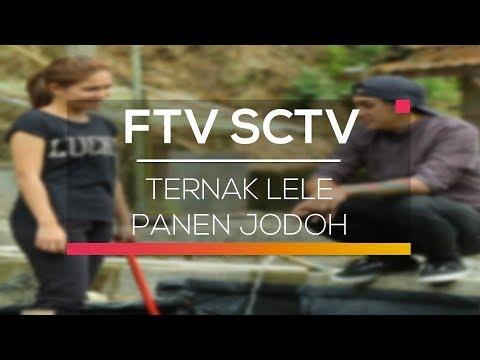 FTV SCTV - Ternak Lele Panen Jodoh