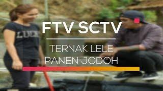 Video FTV SCTV - Ternak Lele Panen Jodoh download MP3, 3GP, MP4, WEBM, AVI, FLV November 2019