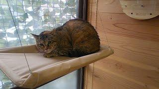 去年のポンハウスの様子 https://youtu.be/LD8fZZfYp58 ☆Self-introduction☆ This is the shelter I made for stray cats. I have been reforming the shelter to make it ...