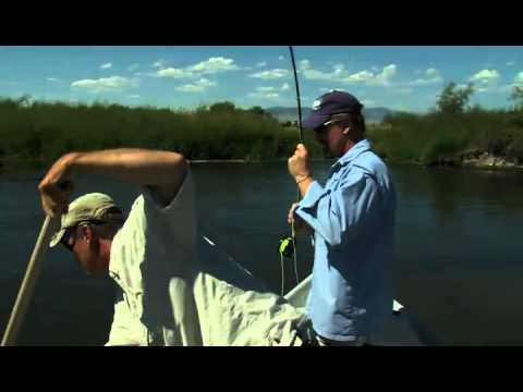 BROWN TROUT ON HOPPERS FLYFISHTV