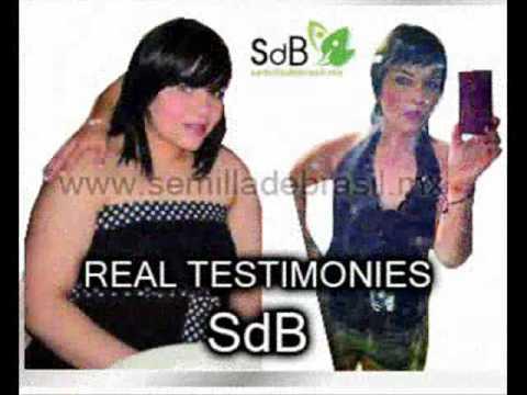 SEMILLA DE BRASIL MONTEMORELOS MATRIZ - YouTube