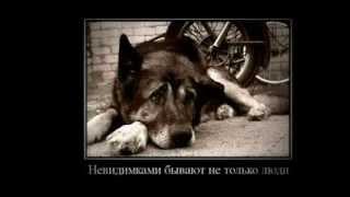Любая собака хочет быть любимой!