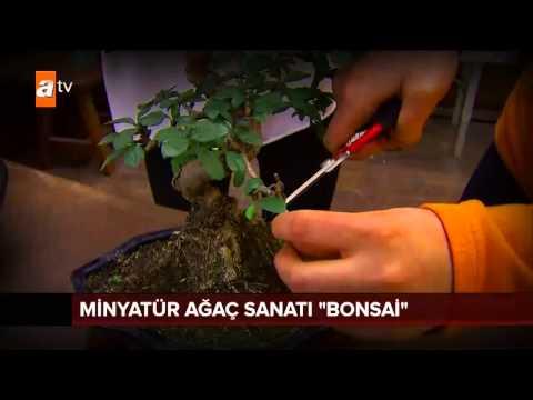 Minyatür ağaç sanatı