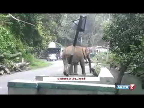 Elephant invade Coonoor Road for Jackfruit   Tamil Nadu   News7 Tamil  