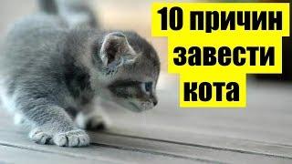 10 причин почему стоит завести кошку | Актуально