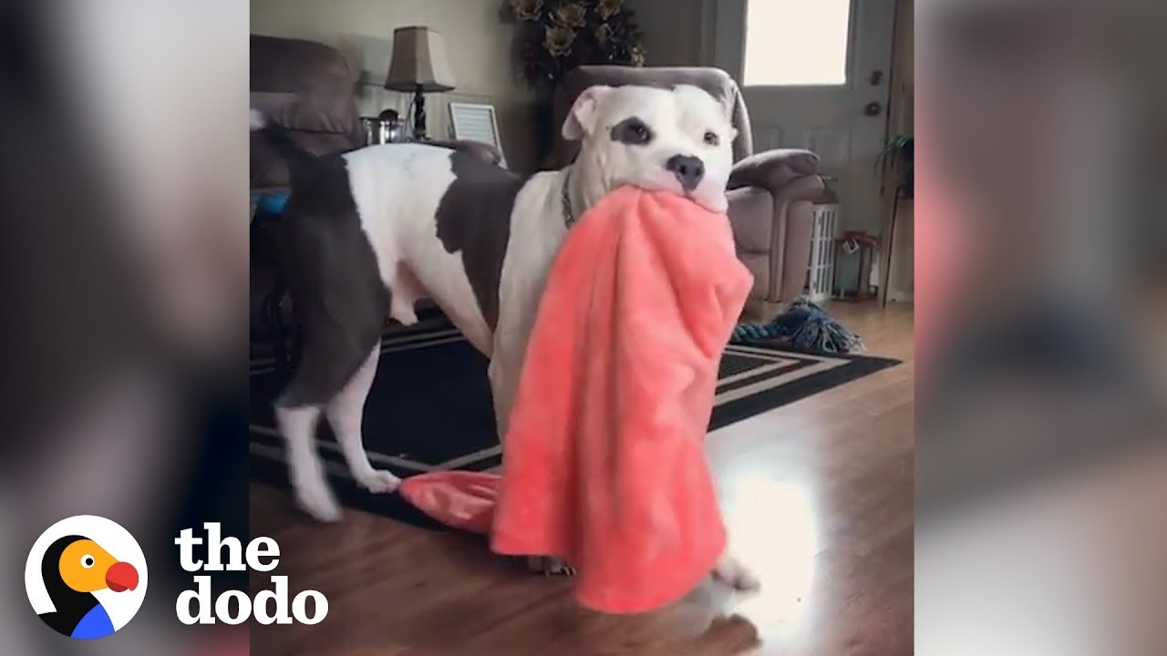 Dogs Who Grab Things When They're Excited | The Dodo