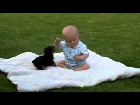 귀여운 아기 대 귀여운 강아지
