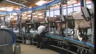 Des cultures bio au lait bio
