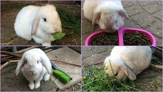 6 Common Mistakes that Rabbit Owners Make! | Furry Friends