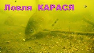 Поклевки КАРАСЯ на поплавочную удочку. Подводные съемки. Рыбалка. Fishing. Ловля на поплавок(Поклевки КАРАСЯ на поплавочную удочку. Подводные съемки. Рыбалка..….((Мой канал- это (в основном) канал ЛЮБИТ..., 2016-05-28T16:19:01.000Z)