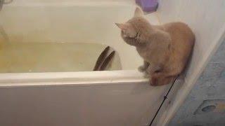 Реакция кошки на живую рыбу