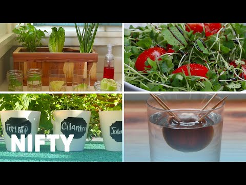 4 Tips And Tricks For Growing Your Own Food