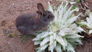 토끼가족들과 청계닭가족들 하루일과, 토끼굴