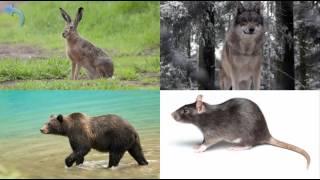 Учим животных леса.  Развивающее видео для детей