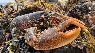 Coastal Foraging - Lobster, Crabs, Seaweeds and Rockpooling.