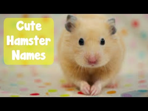 60+ Hamster Name Ideas