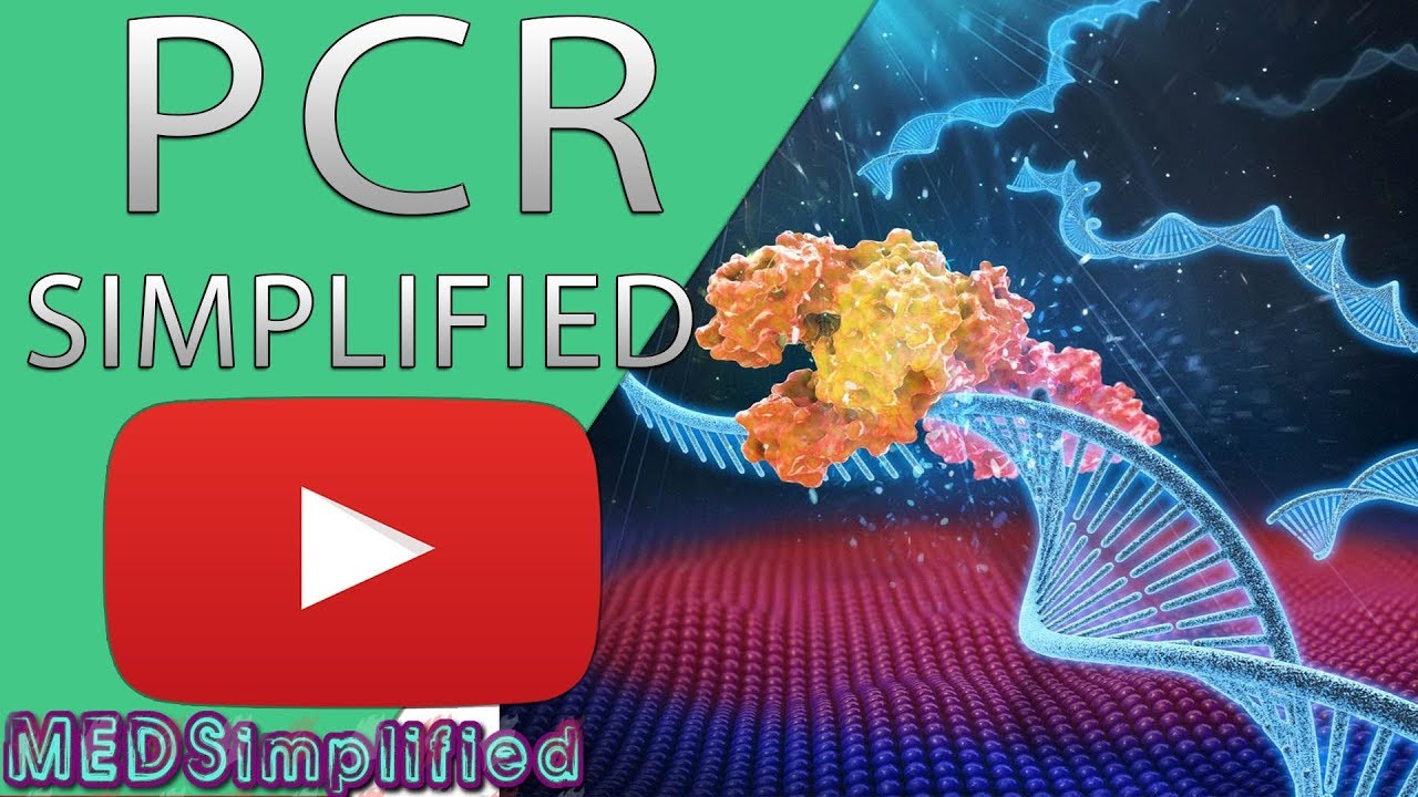 Download PCR - Polymerase Chain Reaction Simplified