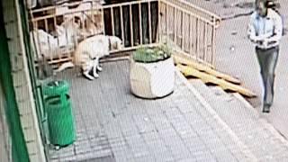 Люди хуже животных.. Гадить таким возле двери.