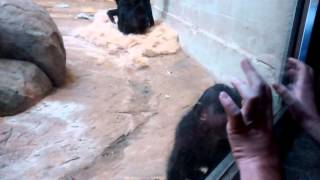 Monkey Love (Bonobo)