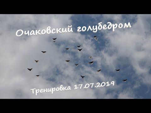 Очаковский голубедром. Тренировка голубей 17.07.2019
