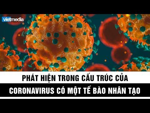 Trong cấu trúc của virus corona có một tế bào nhân tạo thông dụng trong phòng thí nghiệm