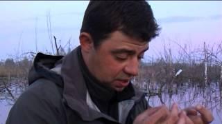 Моя рыбалка: Караси