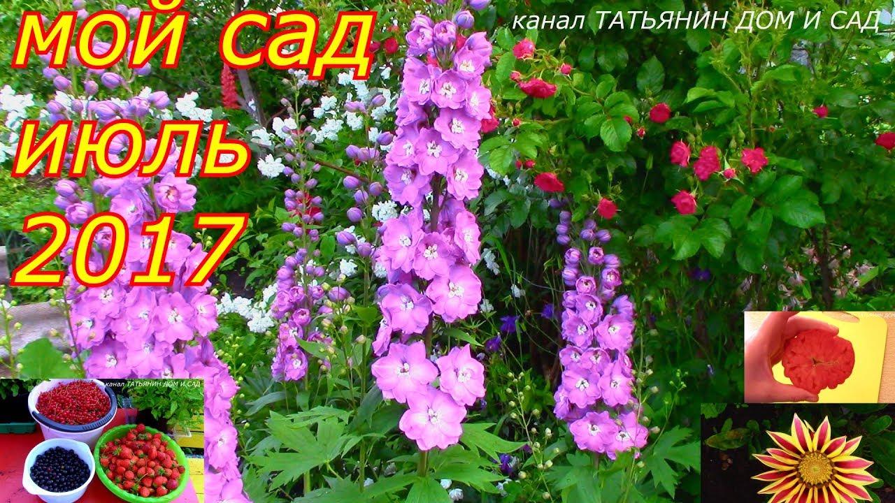 сад мой сад фото