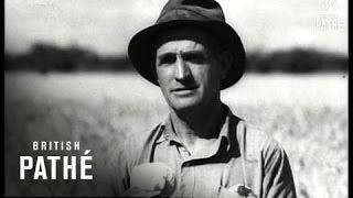 Australia - Record Wheat Harvest (1947)