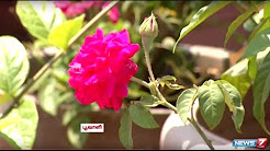 Fill your Terrace with Flowers and Herbs   Gardening Tips   Poovali   News7 Tamil