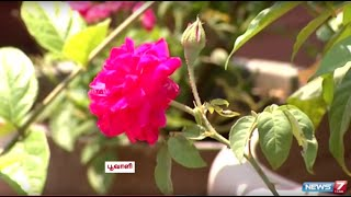 Fill your Terrace with Flowers and Herbs | Gardening Tips | Poovali | News7 Tamil