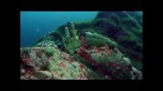 К глубинам Байкала(Научно-популярный фильм «К глубинам Байкала» посвящен исследованиям озера Байкал, которые состоялись..., 2014-04-03T06:13:43.000Z)