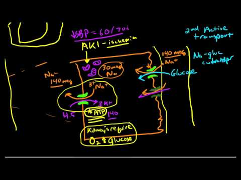 Renal Physiology: Reabsorption and Excretion