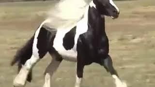 أحلى حصان ع أغنية .دوارة الايام😍👌