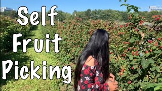 FRUIT PICKING | Berries Picking | #FruitPicking | #PickingFruits | #FruitsPicking