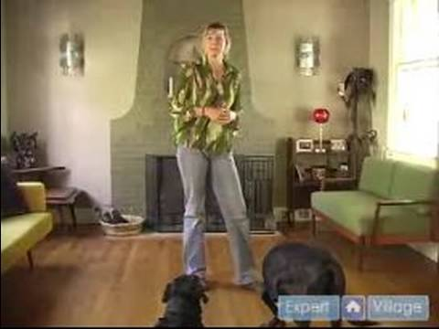 how-to-train-your-dog-:-prevent-your-dog-from-barking-at-the-front-door:-part-1