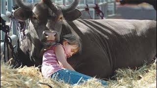 Мужчина спас быка от смерти и тот отплатил ему любовью и верностью