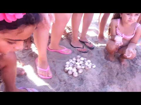 Incredibile uova di tartaruga in spiaggia e subito accade for Incubazione uova tartaruga