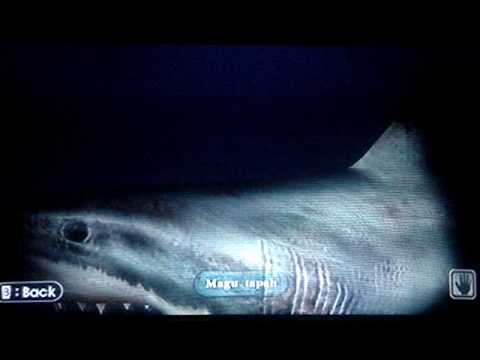Endless Ocean (Wii) - Great White Shark