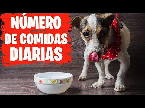 Cuantas Veces Debe Comer un Perro al día