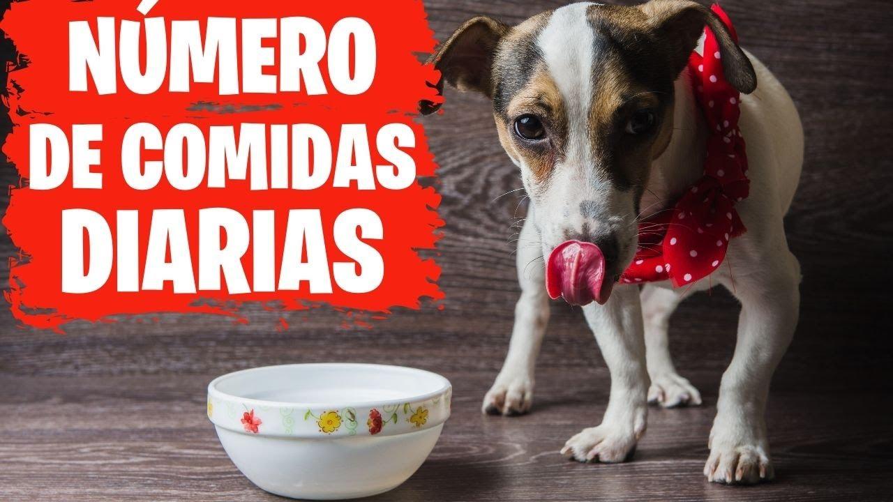 Cuantas veces debe comer un perro por dia esto no lo sabias youtube - Comida para cachorros de un mes ...