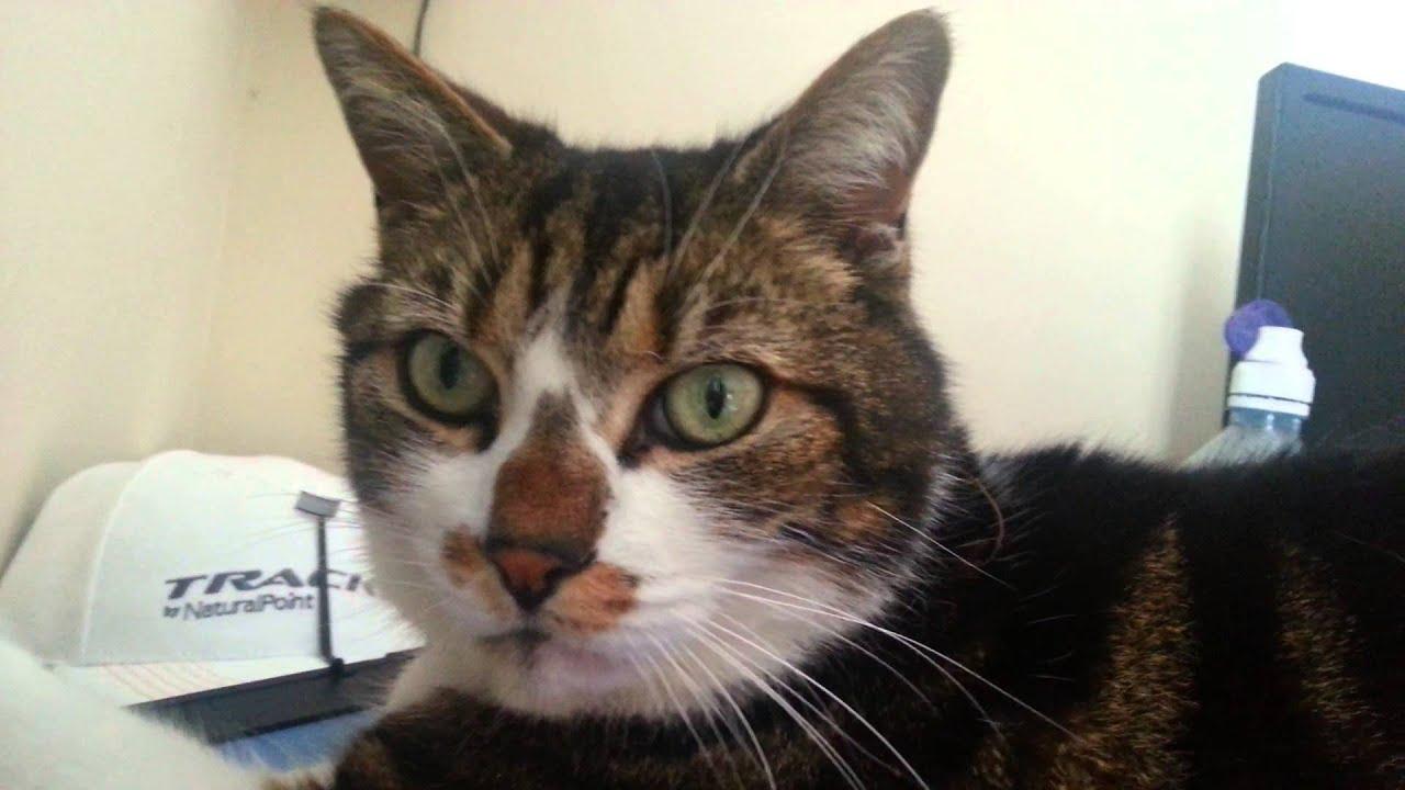 seresto flea collar for cats review