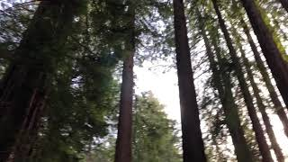 maxresdefault Acura San Francisco