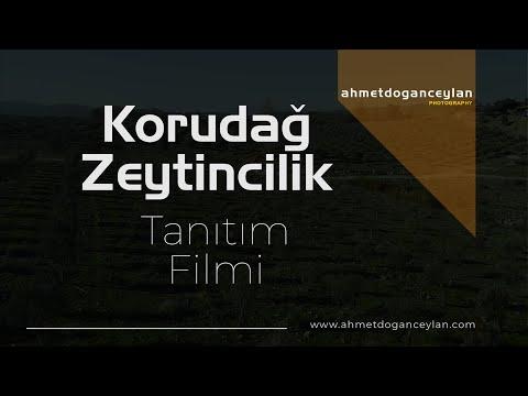 Korudag Zeytin