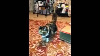 Кошки-алкашки. ЖЕСТЬ!!!