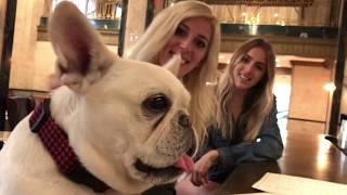 Dog-friendly Nashville Bars