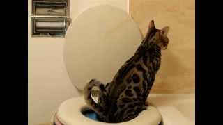 Step 4, Toilet Training Cat (#1 Clean)
