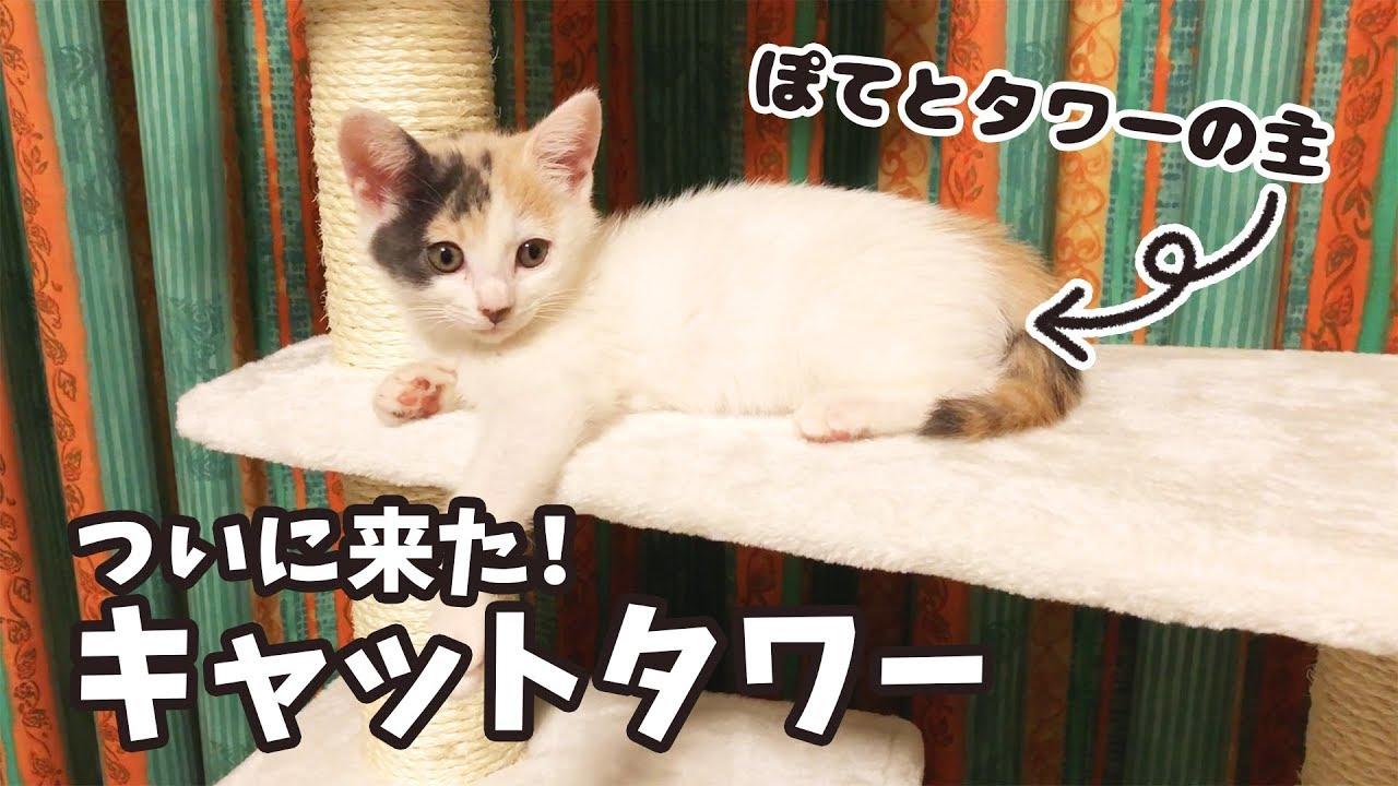 子猫のぽてとにキャットタワーをプレゼント