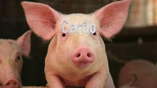 Cours d'espagnol 101: Animaux de la ferme