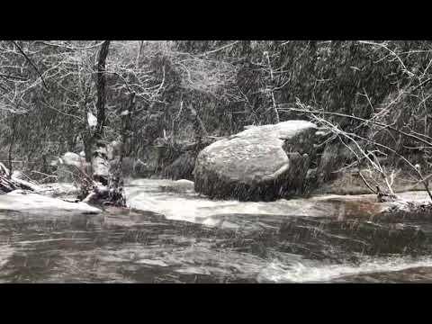 Lewis Creek